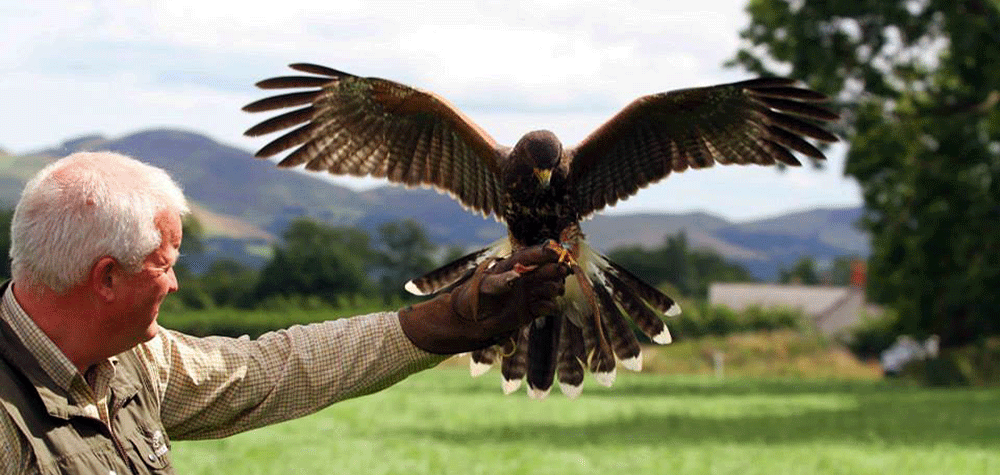 David With Bird Of Prey Landing On His Arm