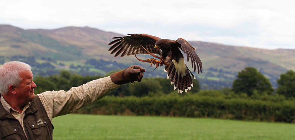 David With Bird Of Prey Spreading Its Wings